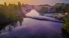 http://www.mymodernmet.com/profiles/blogs/danilo-dungo-cherry-blossoms-aerial-photos