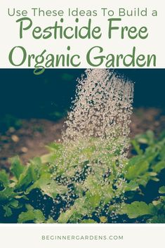 Are you a beginner gardener? Looking to start an organic garden? These organic gardening tips will help you get started when you are looking to start an organic garden. Organic Gardening Tips, Organic Plants, Organic Vegetables, Vegetable Gardening, Gardening Hacks, Organic Container Gardening, Organic Pesticides, Sustainable Gardening, Flower Gardening
