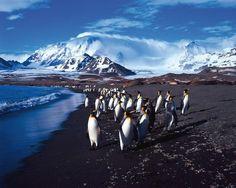 Patagonie, Cap Horn, Géorgie du Sud