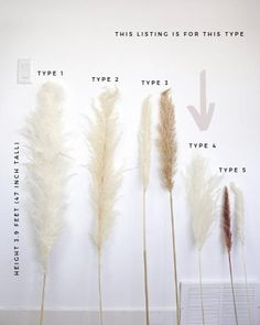 PAMPAS GRASS Type 4 Stems)- Natural White Dried Pampas Plant Decor, Pampas Wedding Decor Bouquet, Boho Bohemian Wedding Flower The Effective Pictures We Offer You About wedding decorations stage A Bohemian Wedding Flowers, Floral Wedding, Bohemian Wedding Decorations, Deco Floral, Floral Design, Grass Centerpiece, Fairy Wedding Dress, Wedding Dresses, Grass Type