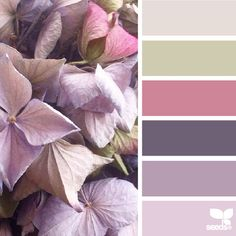 today's beautiful photo for { petaled hues } is by @angiesacher ... inspiration such as this is amongst my favorite because it takes so much control when creating the palette ... it is all about chroma control + allowing the tones to create a harmony ... thank you, Angie ~ i very much appreciate your generously sharing your talent in #SeedsColor