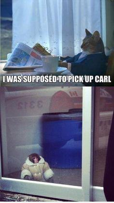 Carl.. | Cat Meme