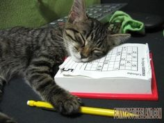 Will this make you laugh? falling asleep doing sudoku