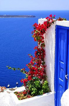 That contrast of red against the blue and white. Buganvillas en Santorini. www.hwings.net