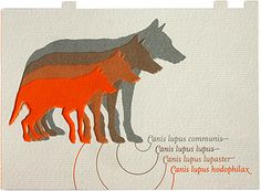 wolf-musterbox by wehr & weissweiler