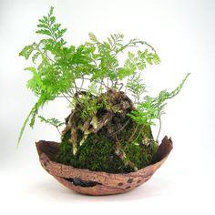 Reddish Tan Kusamono Pot, Bonsai Accent Planter, Rust Succulent Planter, Shallow Ceramic Flower Pot, Riveted Bark Plant Pot 10-16-78