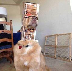 La Stampa - 15 foto per far sorridere Ci vuole pazienza canina