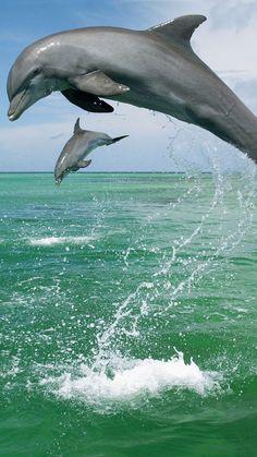 Pic of the Day...Reach  --------------------- #beach #dolphins #tropics #beaches