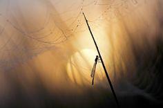 Morning - Defaults to the sun in dense fog . Dense Fog, Native American Indians, Nature Photos, Canon, World, Outdoor, Sun, Silhouettes, Lenses