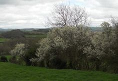 The Hedgerows of Britain: native flora and fauna of traditional British hedgerows