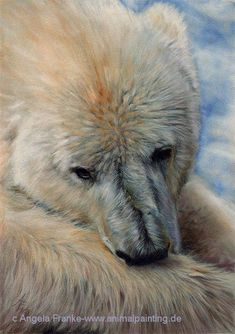 Polar Bear ~ Pastel drawing by Angela Franke