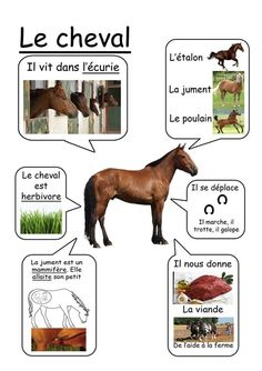 Cheval - Animaux de la ferme animals silly animals animal mashups animal printables majestic animals animals and pets funny hilarious animal French Teacher, Teaching French, French Education, Kids Education, How To Speak French, Learn French, Life Science, Science Nature, Montessori
