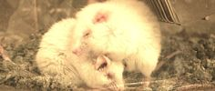 Help End Avoidable Chemical Tests on Animals in the EU