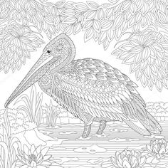 Stock Vector Of Stylized Pelican Standing Among Water Lilies Lotus Flowers And Pond Algae Freehand Sketch For Adult Anti Stress Coloring Book Page With