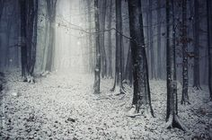 Road in an enchanted fairy tale forest with snow and fog #stocksy #photocosma
