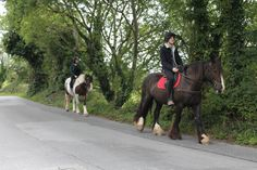 Rocky & Midnight taking a novice rider out for a hack. #loveirishhorses #horseforsale  click on our website to find out more about #horseriding #holidays at Cooper's Hill Livery http://coopershilllivery.wix.com/coopers-hill-livery