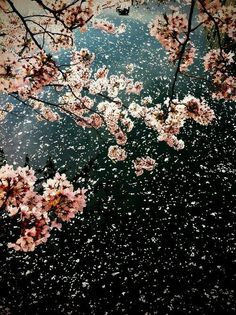40 Ideas cherry blossom tree wallpaper spring for 2020 Frühling Wallpaper, Flower Wallpaper, Wallpaper Backgrounds, Cherry Blossom Wallpaper, Spring Wallpaper, Belle Photo, Pretty Pictures, Mother Nature, Planting Flowers