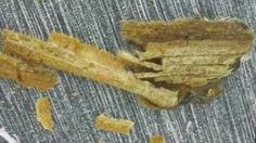 """Ancient plant material was perfectly preserved in the glass formed when asteroids hit the Earth millions of years ago, scientists report. The """"frozen in aspic"""" appearance of what are apparently blades of grass is spectacular enough. But a team writing in Geology journal says that delicate organic chemicals have also been conserved inside."""