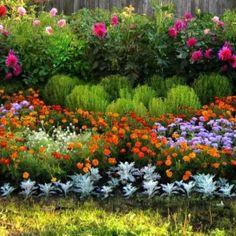 Какие цветы надо сажать …