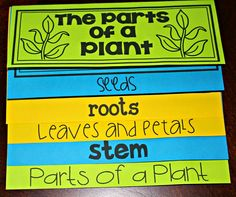 parts of a plant booklet