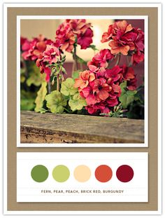 @Rachel Jones, this looks like the perfect pallet?  Color Card 072: Fern, Pear, Peach, Brick Red, Burgundy
