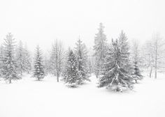 Winter photography Snow photography Woodland forest Minimalism Christmas Black and White. Snow Photography, Christmas Photography, Photography Ideas, Minimal Christmas, Winter Christmas, Black Christmas, Winter Snow, Woodland Forest, Winter Photos