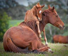pais, filhos, animais
