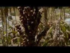 The Secret of El Dorado (The discovery of Biochar) - YouTube