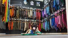 this is the best place for buying high quality dog training equipment. No matter if you are a professional or amateur dog trainer, you will find everything you need for successful training sessions and pleasant daily walking.We are the largest and leading dog gear and training equipment manufacturer for Working dog, hunting dog and sportdog handlers in The Netherlands. Dog Training Equipment, Daily Walk, Hunting Dogs, Working Dogs, Netherlands, Holland, Walking, Sports, Handmade