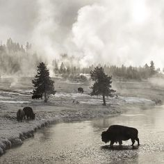 Today Yellowstone National Park opens for the winter season. : @drewtrush  ________________________________________________________________________________ @natgeocreative @thephotosociety by natgeo