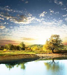 #trees #amazing #view