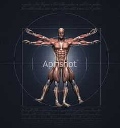 Muscles of a vitruvian man for study – Aprishot Photography: Royalty Free Stock Photography, Royalty Free Video, Free Images,