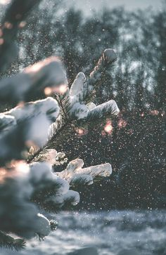 (27) Tumbir☃❄ shared by Cillyhammes. on We Heart It