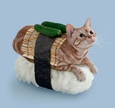 PHOTOS: Check Out These Adorable Sushi Cats