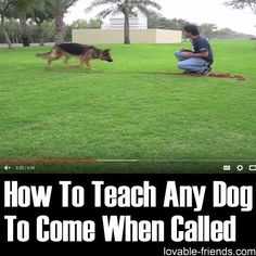How To Teach Any Dog To Come When Called