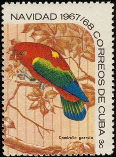 Chattering Lory Parrot - Cuba