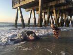 VIDEO: Leatherback turtle visits Tybee   Savannahnow.com Mobile