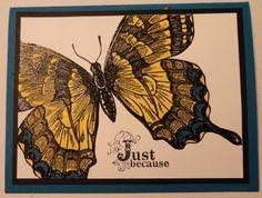 Swallowtail---