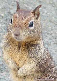 Where's my peanut?