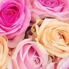 Pretty #bloomspiration