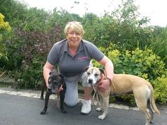 Start-up story about PetStay East Lancs & Bury. PetStay is the real alternative to kennels. PetStay carers will look after your dog/s in their home and all are fully licensed and insured. Bury, Your Dog, Labrador Retriever, Chocolate Labradors, Berries, Labrador Retriever Dog