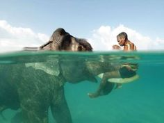 swimming with Elephants...I bet it's even cooler than swimming with Dolphins! lol I swam with dolphins years ago and loved it, but would totally swim with an Elephant if I ever get the chance to!