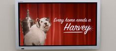 """Ogni casa ha bisogno di un Harvey""… - Every home needs a Harvey. Around personal branding."