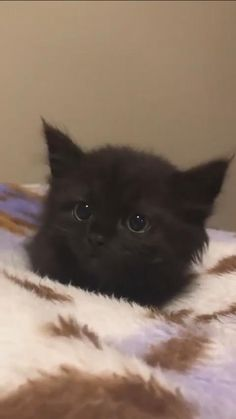 Cute Baby Cats, Cute Cats And Kittens, Cute Little Animals, Cute Funny Animals, Kittens Cutest, Funny Cats, Cute Dogs, Black Kittens, Baby Kitty