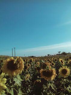 sunflower. #sunflower #nature #sky #colors #flower