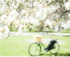 .❄*¨* ~ au printemps