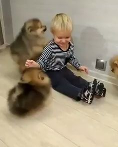 So cute baby puppies, cute puppies, puppies gif, dogs and puppies, fluffy Cute Funny Animals, Cute Baby Animals, Funny Cute, Funny Dogs, Animals And Pets, Funny Kittens, Funny Humor, Baby Puppies, Cute Puppies
