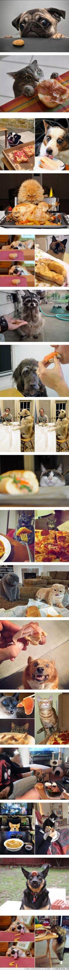 Nada despierta más las emociones de los animales que la comida