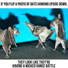 If you flip a photo of bats hanging upside down, they look like they're having a wicked dance battle.