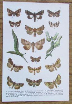 Schmetterlingsbuch Schmetterling Butterflies - Kurt Lampert 1912 Farbtafel 19